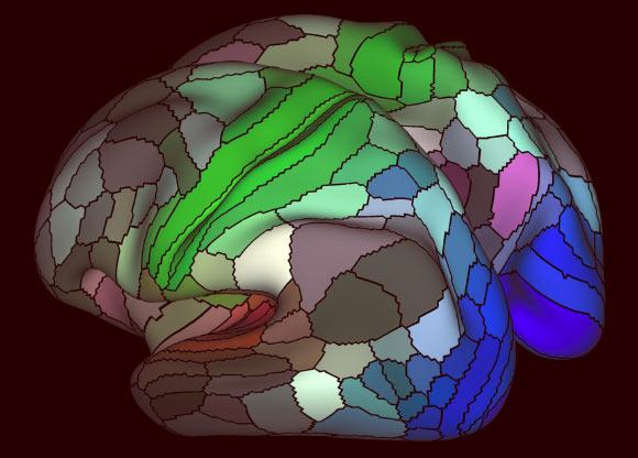 Neuroscientists Release New Map of Human Cortex