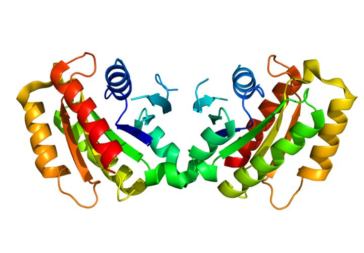 The image shows the structure of protein LRRK2.