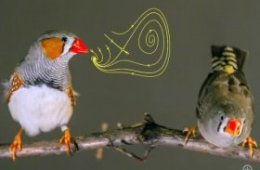 The image shows two small birds sitting on a branch.