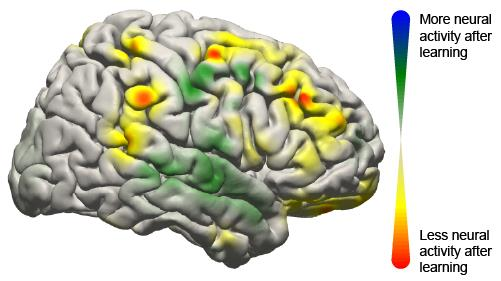 The image shows the activity changes in the brain during the brain machine interface study.