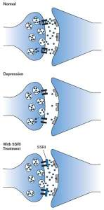 The image shows how neurons function with SSRIs.