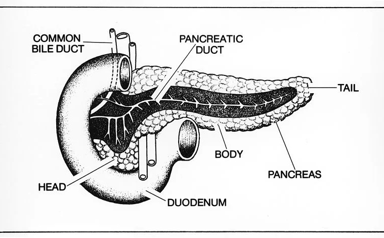 This is a diagram of the pancreas.
