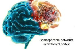 The image shows a representation of schizophrenia networks in the prefrontal cortex.