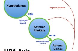 This is a diagram of the hpa axis.