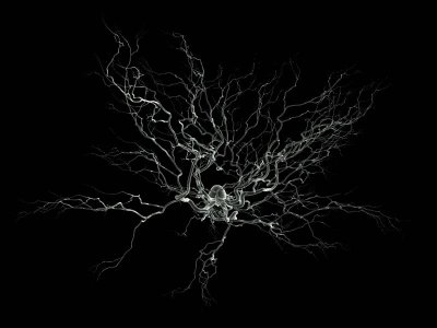 This image shows a neuron with lots of branches.