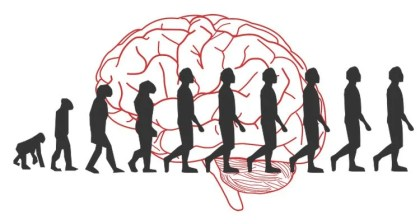The image has a brain as the background and show the decent of man diagram in the foreground.