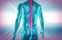 This image shows an outline of a body in blue with a bright pink spinal cord.