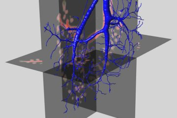 The image shows a representation of a neuron created by the virtual finger.