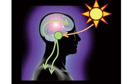 This image is a representation of circadian rhythm. It shows a sun, the outline of a human head and arrows to represent how the brain functions.
