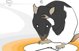 The image is a drawing of a rat holding its head.