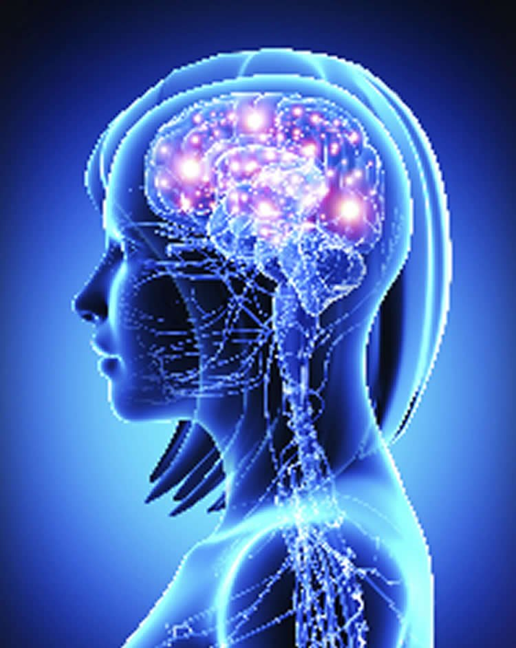 New Discovery in the Study of the Brain and Memory