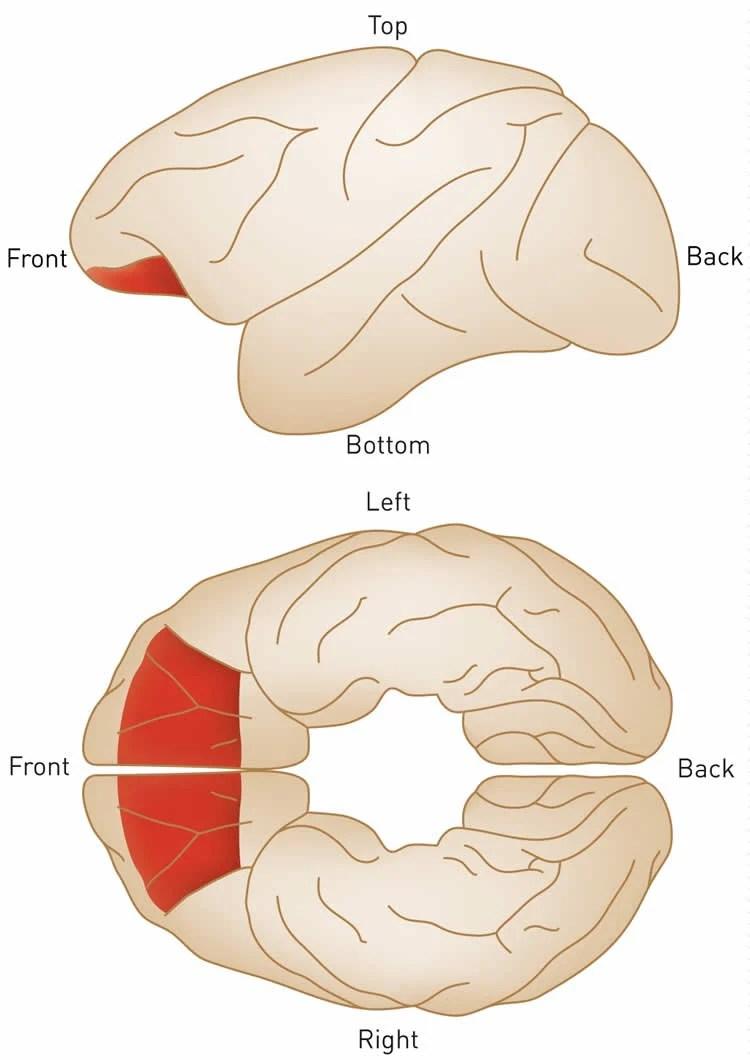 Where the Brain Makes Difficult Decisions - Neuroscience News