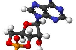 This image shows the molecular structure of cAMP.