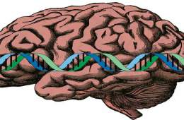 This image a brain with a strand of DNA over it.