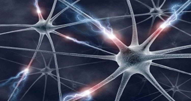 Researchers Develop Method for Mapping Neuron Clusters