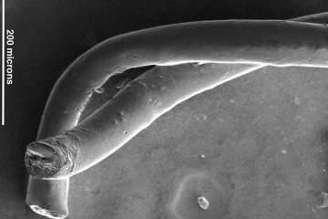 This shows carbon nanotube fibers.