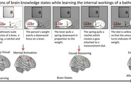 Images shows the progression of brain knowledge states as it learns a technical process.
