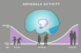 This illustration shows how the amygdala responds to the opposite sex over the child's development.