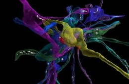 This is a 3D reconstruction of 13 axons.