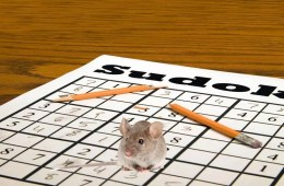 This image shows a mouse sitting on a sudoku puzzle book.