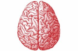 This image shows a red drawing of a brain.