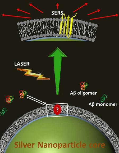 This shows how AB lands on the fake cell membrane.
