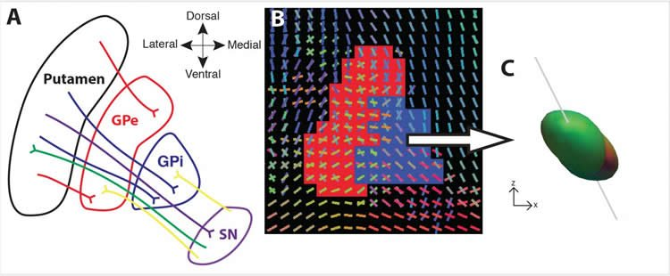 Researchers Visualize Critical Part of Basal Ganglia Pathways