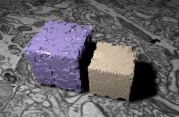 This shows a compact white cube and compact purple cube. The models represent brain tissue.