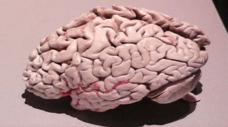 Potential Mechanism for Neurodegenerative Diseases Identified