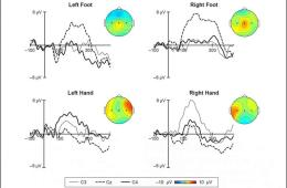 Graph shows different patterns of activity in the infant brain. The caption best describes the image.