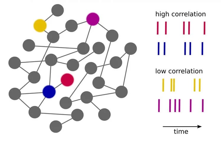 Diagram of neurons with synchronous activity network.