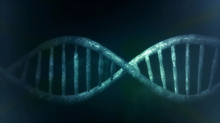 Image shows a DNA double helix.