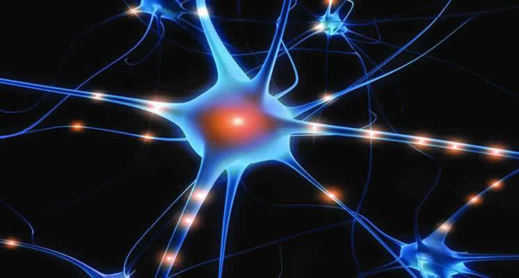 A Single Neuron May Carry Up To 1000 Genetic Mutations