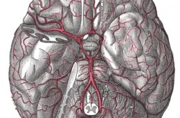 Image shows the blood vessels in the human brain.