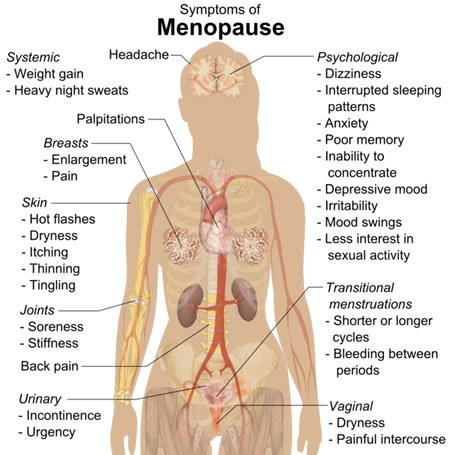 Diagram shows how menopause affects the body.