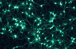 Image of a neural network.
