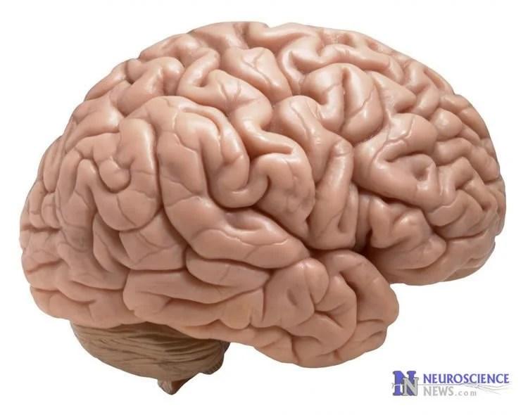 Simple Visual Test Checks Brain Function Quality