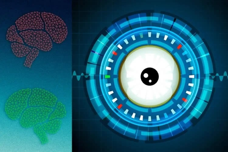 Image shows two brains and a cartoon eye ball.
