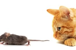 Image shows a cat and mouse.