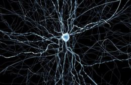 Image shows a virtual neuron.