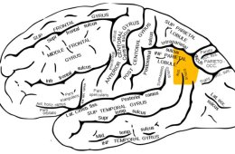 Image shows the location of the angular gyrus in the brain.
