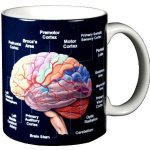 Neuroscience Toys and Gifts