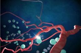 Illustration of neural blood vessels.
