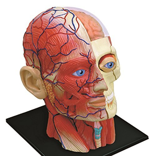 4d Vision Human Head Anatomy Model Neuroscience News