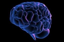 blue brain