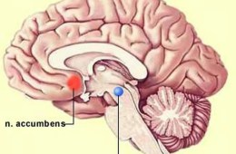 Illustration shows the location of the VTA in the brain.