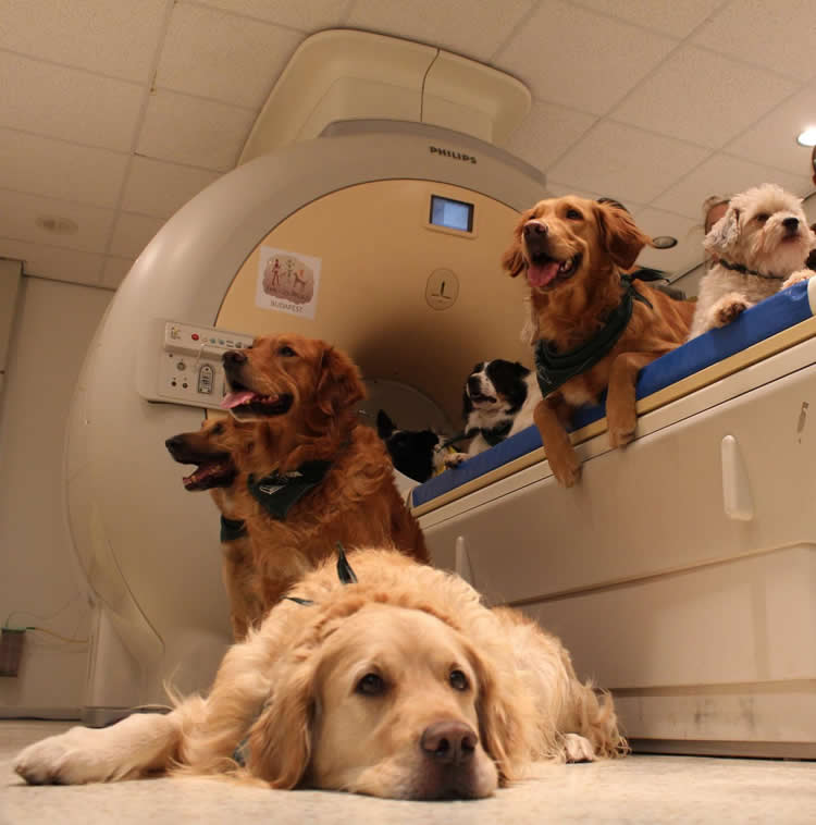 Image shows dogs sitting on the scanner.