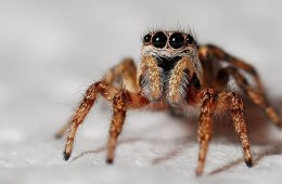 Image shows a spider.