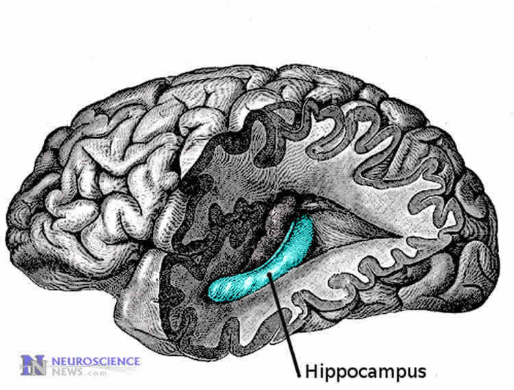 How New Experiences Boost Memory Formation Neuroscience News
