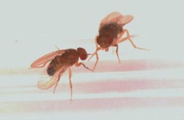 Image shows flies.